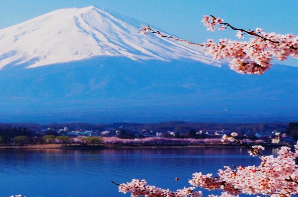 Japan Mt. Fuji Sakura